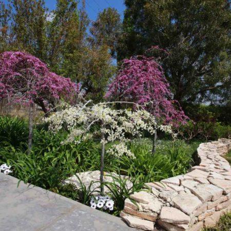 קורס עיצוב צמחייה בנוף
