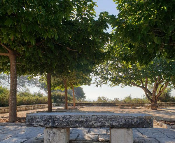 תות דולבני 'קגיאמה' כעץ צל פיסולי- פרויקט בגני רמות הנדיב