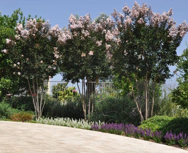 עץ הוא לא רק עלים ופריחה – מה לגבי הגזע והענפים?